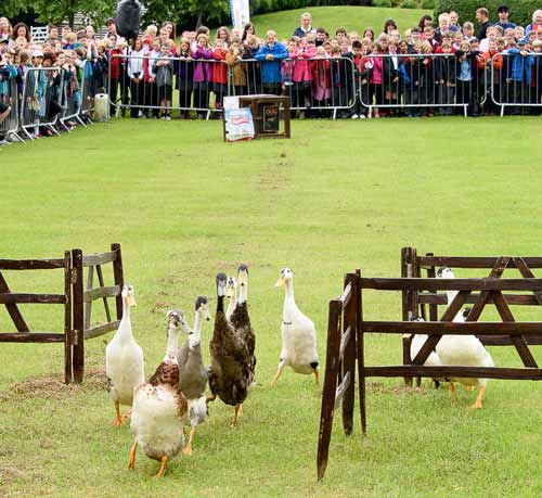 dog and duck show yorkshire