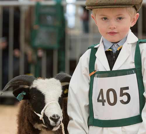 Animal activities for kids yorkshire